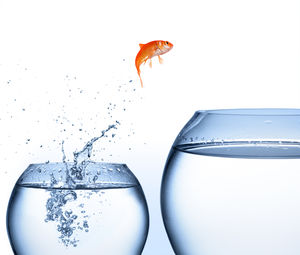 Goldfish_jumping_continual_improvement